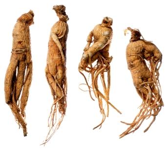 Effets indésirables Ginseng à haute dose