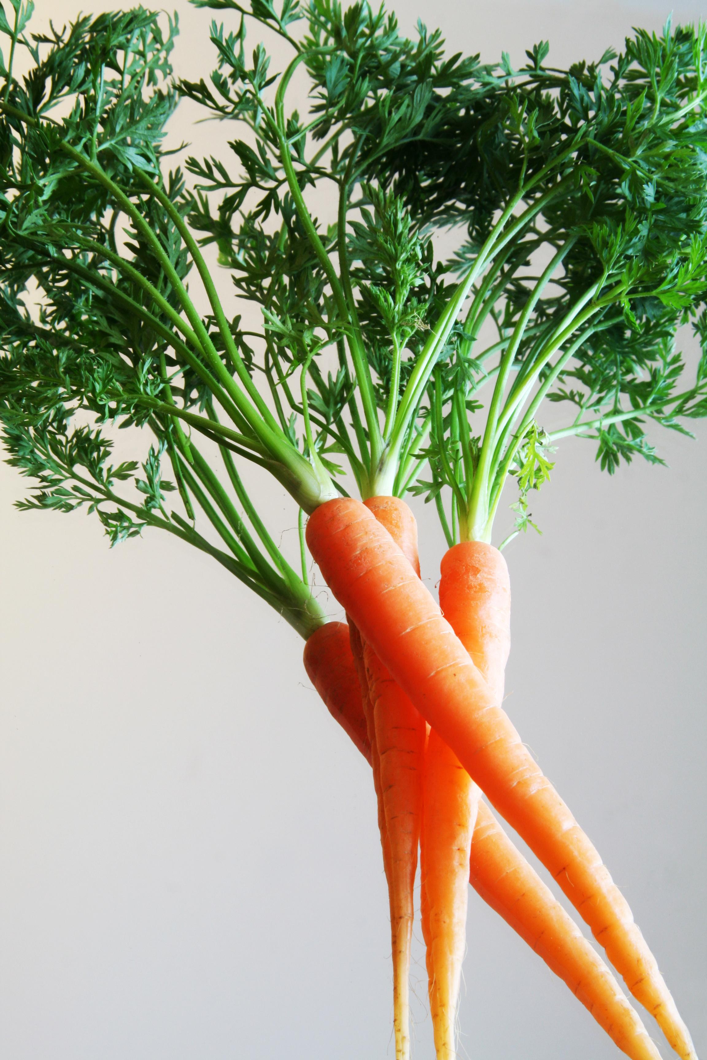 huile de carotte, huile de carotte bronzage, huile essentielle de carotte, huile végétale bio, phytothérapie